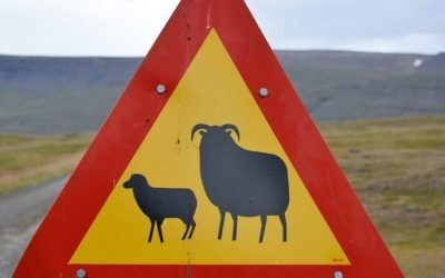 How Not to Overstep in to the Icelandic Market? SEO Tips for Iceland